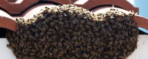 Bee Removal Service in Wilton Manors