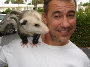opossum removal Boca