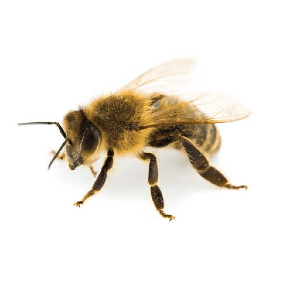 bee removal by wildlife removal services in boca raton florida
