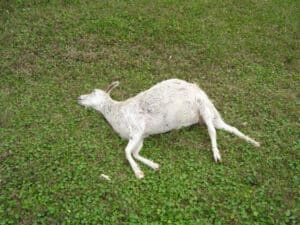 Dead animal removal in  Southwest Ranches