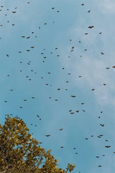 Rabid bats in Boca Raton