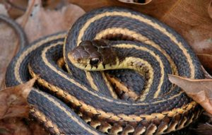 How Much Does Snake Removal Cost in Parkland Fl?