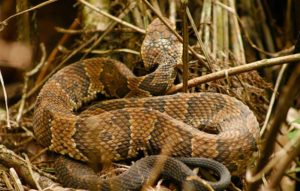 A venomous snake in Parkland- What does it cost to remove?