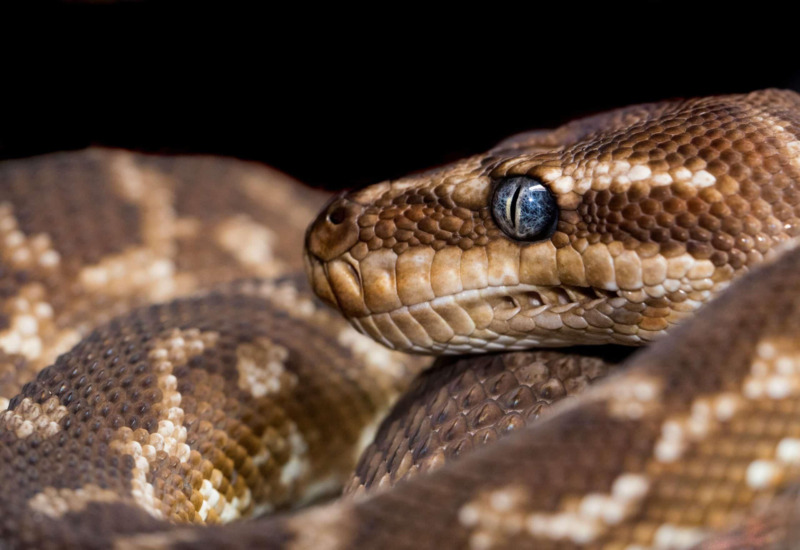 Snake Trapper near me