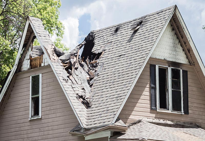 Is Bat Removal Covered by Homeowners Insurance