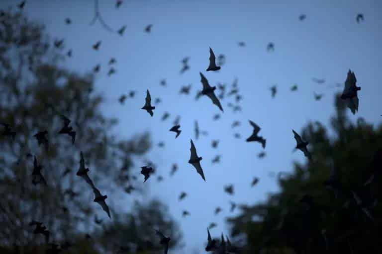 What do bats sound like