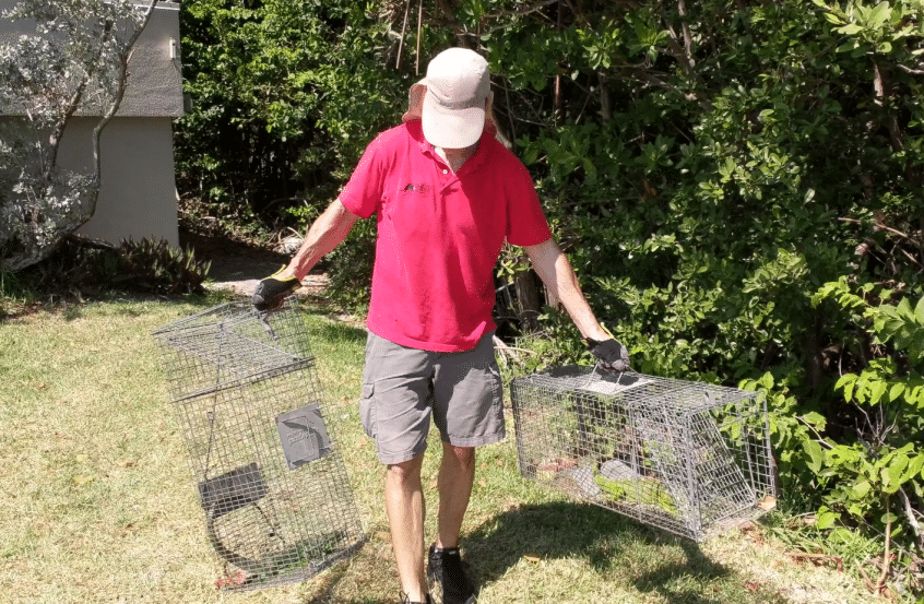 iguana removal cost