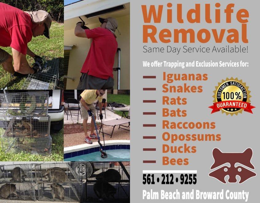 wildlife control services